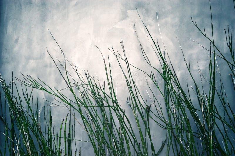 Herbe en bambou photo stock