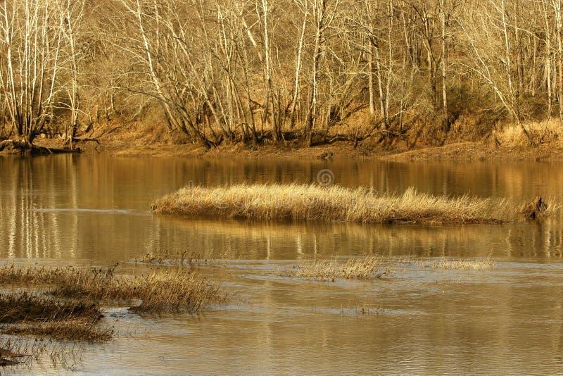 Herbe en rivière d'hiver photographie stock