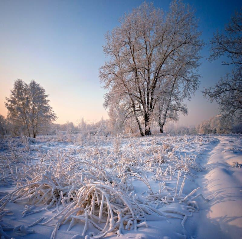 Herbe et arbres couverts de gel et de neige images libres de droits
