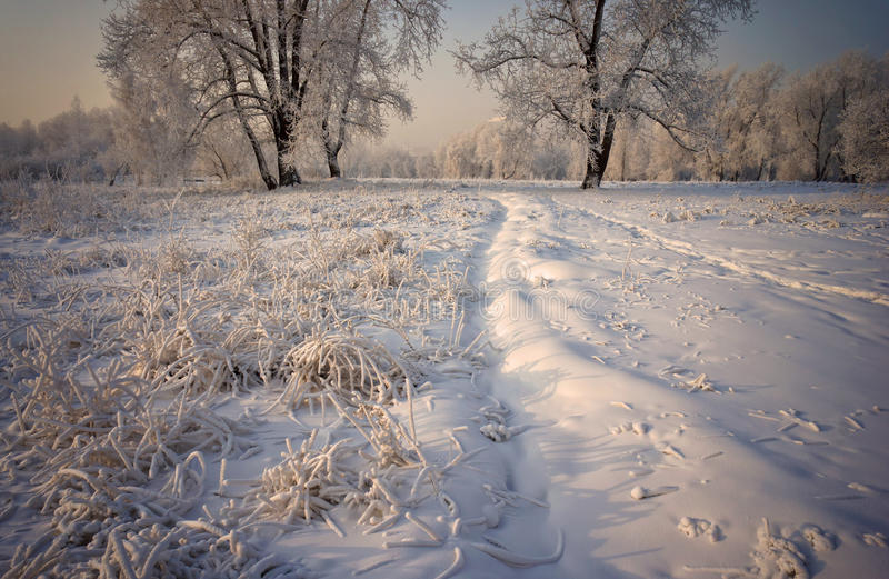 Herbe et arbres couverts de neige images stock