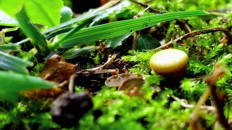 Herbe et champignon et fougère image libre de droits