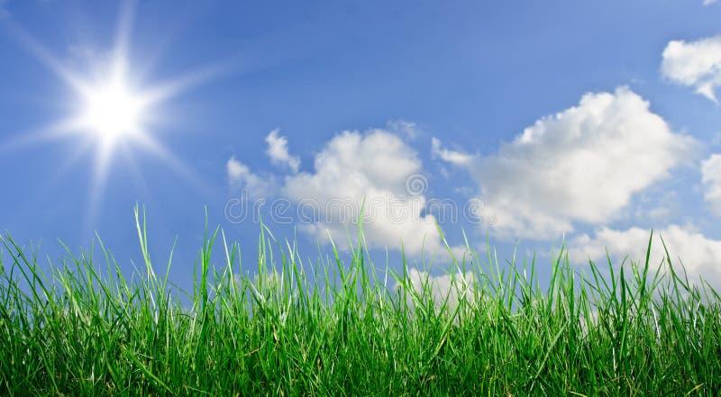 Herbe et ciel image libre de droits