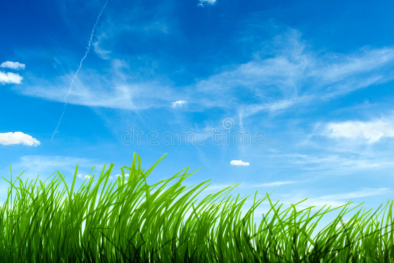 Herbe et ciel bleu images stock