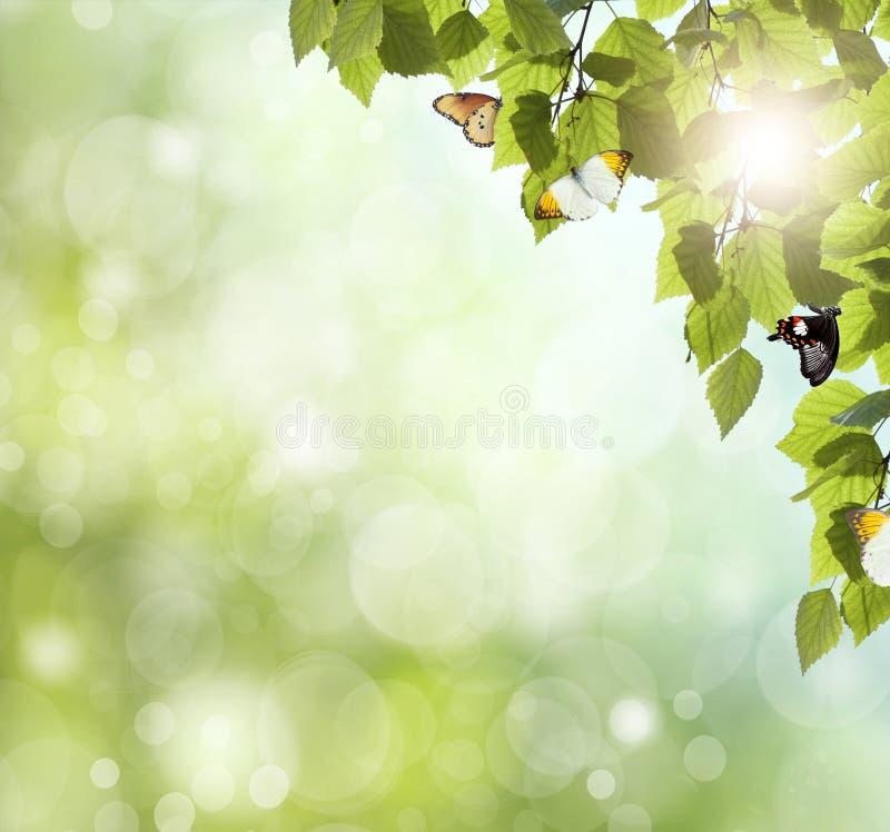Herbe et ciel comme fond photographie stock