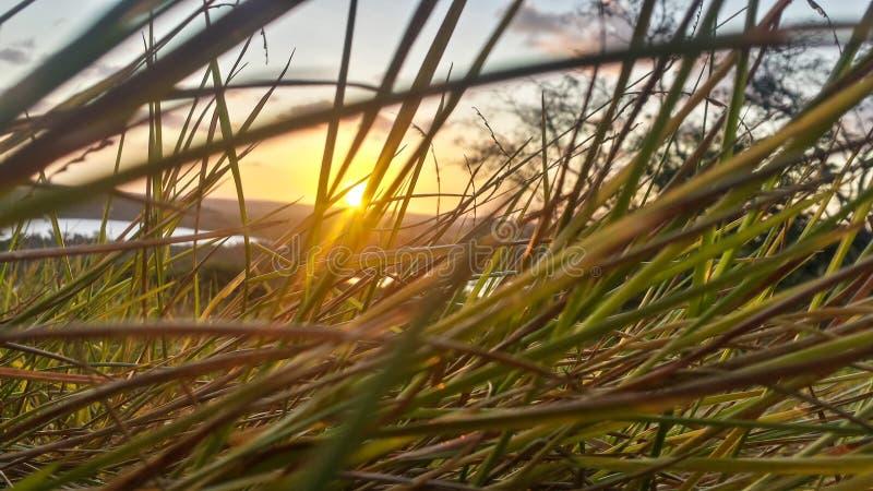Herbe et coucher du soleil images libres de droits