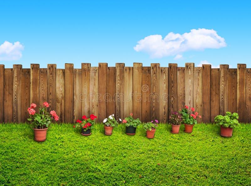 Herbe et fleurs à l'arrière-cour photos stock