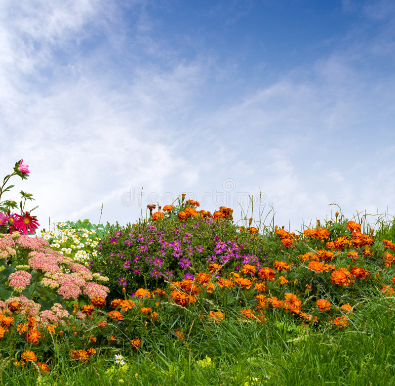 Herbe et fleurs photographie stock