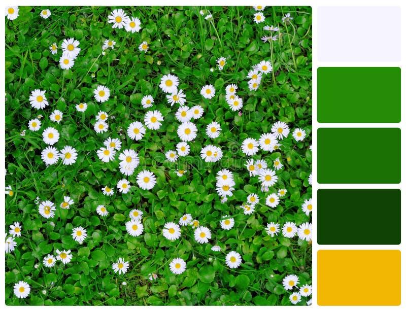 Herbe et fleurs avec des échantillons de couleur de palette photo stock