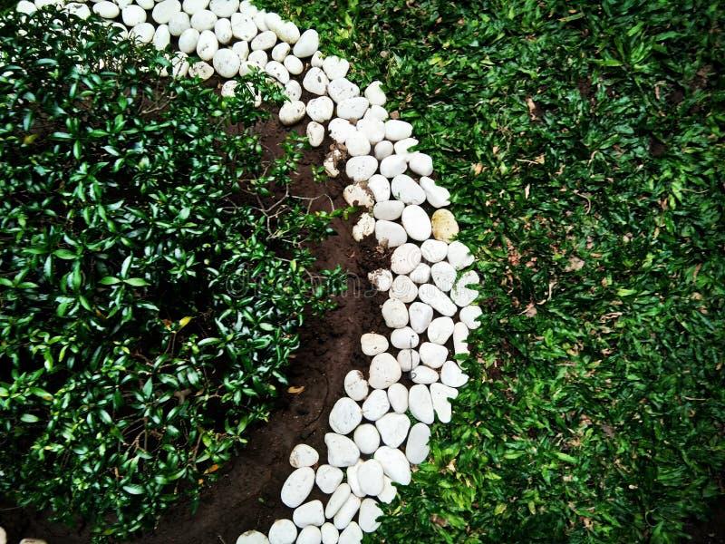 Herbe et les roches photo libre de droits