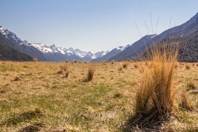 Herbe et montagnes de touffe photos stock