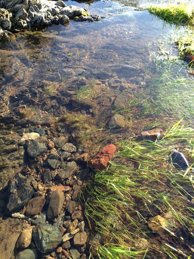 Herbe et roches sous l'eau images stock