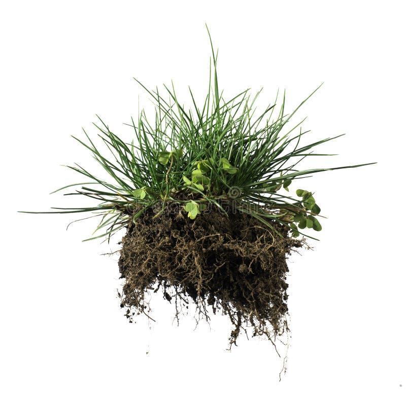 Herbe et terre de gazon photo stock