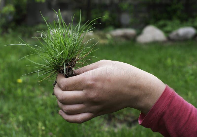 Herbe et terre de gazon photo libre de droits