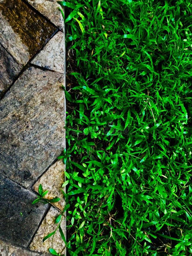Herbe et titre photos libres de droits