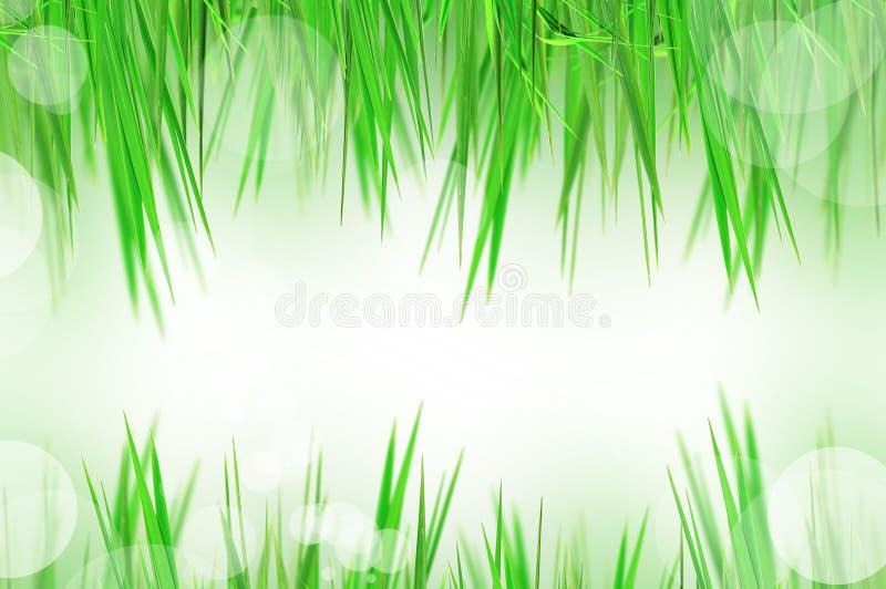 Herbe fraîche images stock