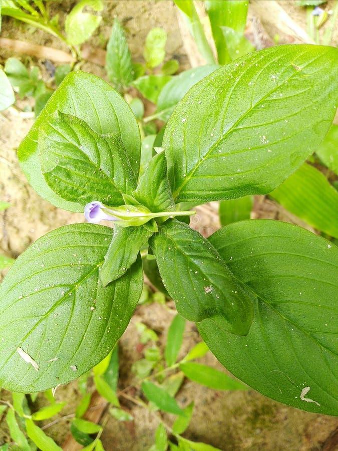 Herbe fraîche avec une petite fleur là-dessus images stock