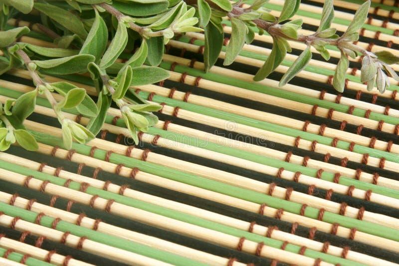 Herbe fraîche de marjolaine sur un fond en bambou photos stock