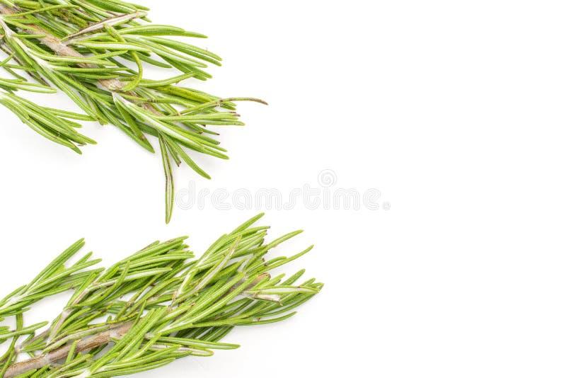 Herbe fraîche de romarin d'isolement sur le blanc photos stock