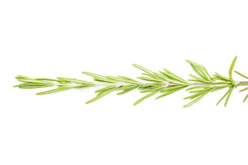 Herbe fraîche de romarin d'isolement sur le blanc image stock