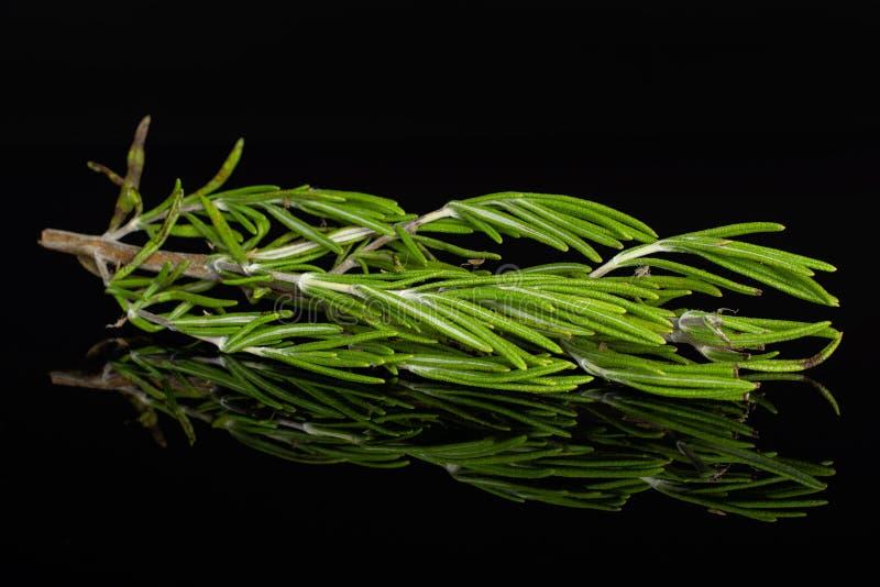 Herbe fraîche de romarin sur le verre noir photos libres de droits