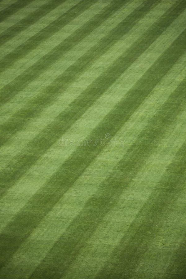 Herbe fraîche de terrain extérieur photographie stock