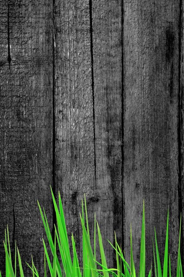 Herbe fraîche et vieux fond en bois image stock