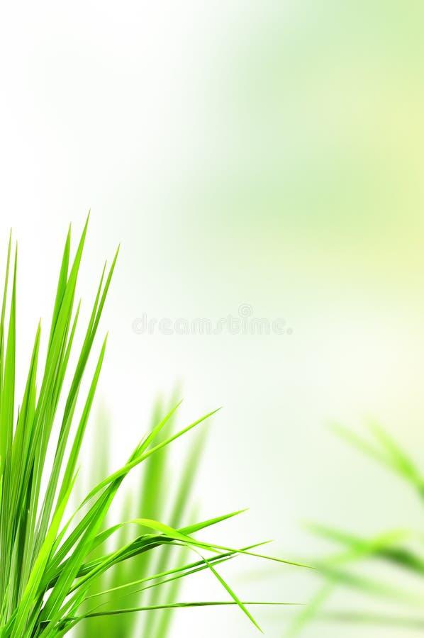 Herbe fraîche pour le fond images stock