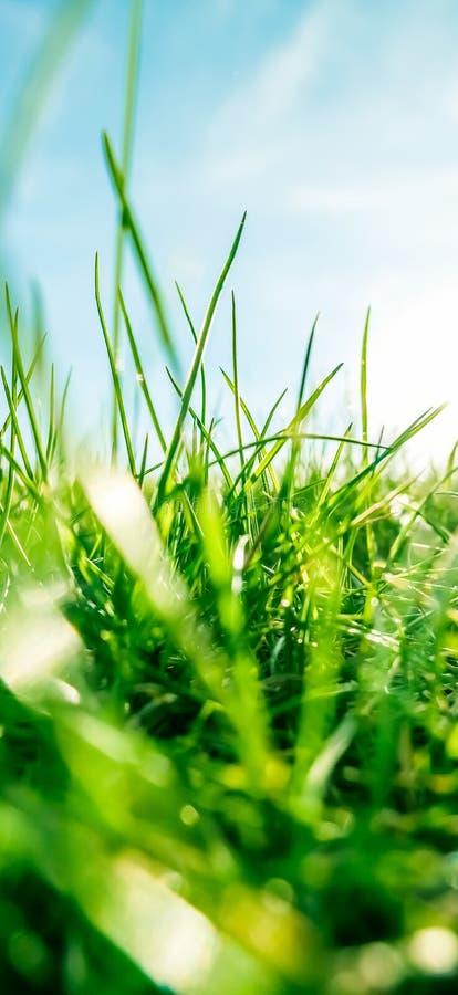 Herbe fra?che et ciel bleu ensoleill? sur un champ vert au lever de soleil, nature de campagne images stock