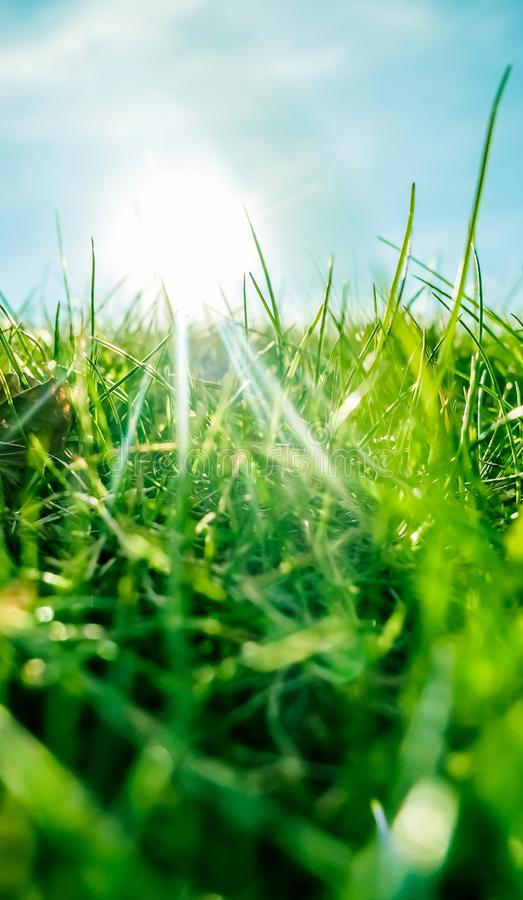 Herbe fra?che et ciel bleu ensoleill? sur un champ vert au lever de soleil, nature de campagne photos libres de droits