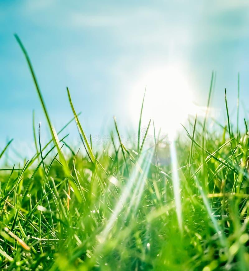 Herbe fra?che et ciel bleu ensoleill? sur un champ vert au lever de soleil, nature de campagne photo libre de droits