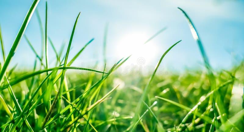 Herbe fra?che et ciel bleu ensoleill? sur un champ vert au lever de soleil, nature de campagne images libres de droits