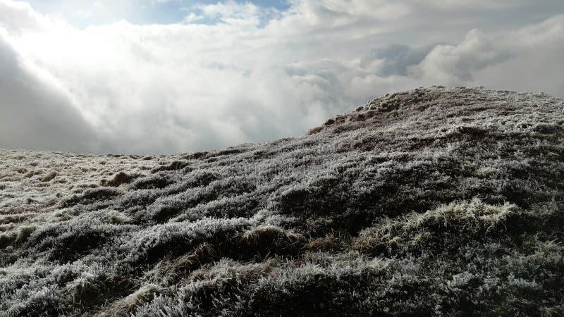 Herbe givrée dans les montagnes photos stock