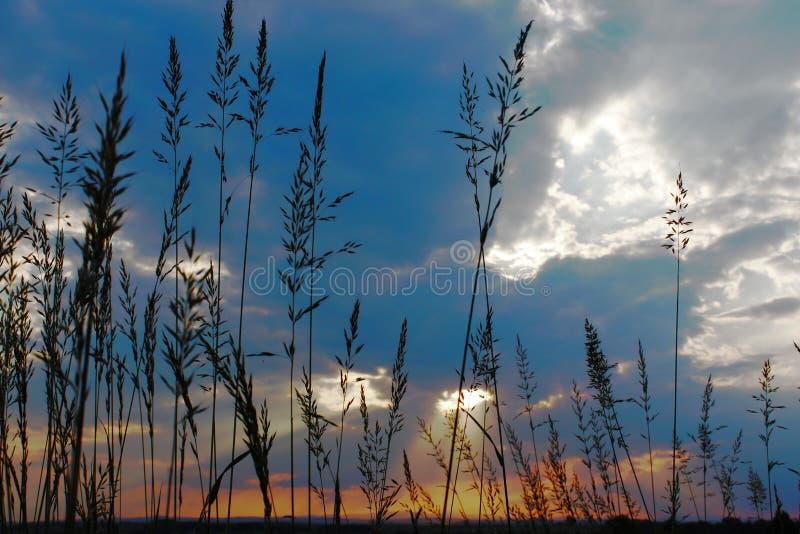 Herbe grande de witr étonnant de soleil images stock