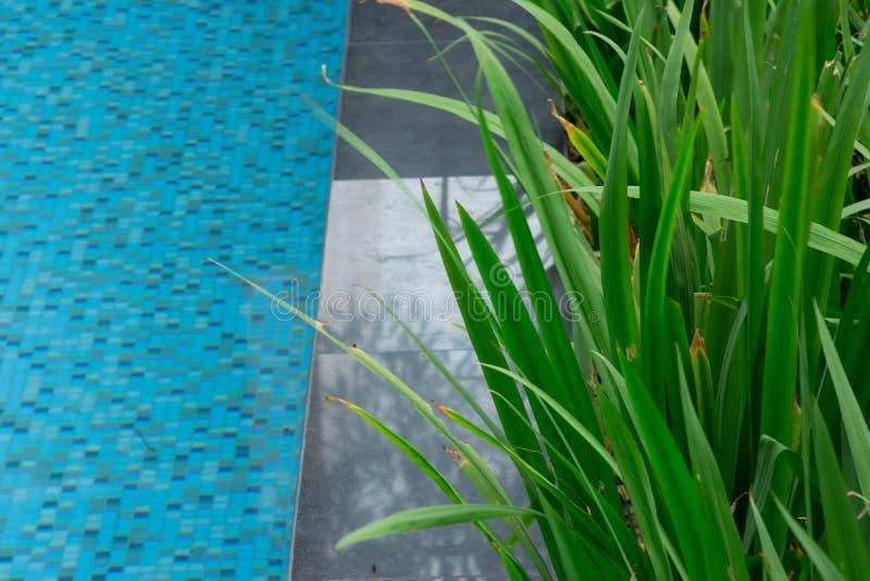 Herbe grande fraîche près de la piscine pour faire du jardinage près de l'eau Le GR photos libres de droits