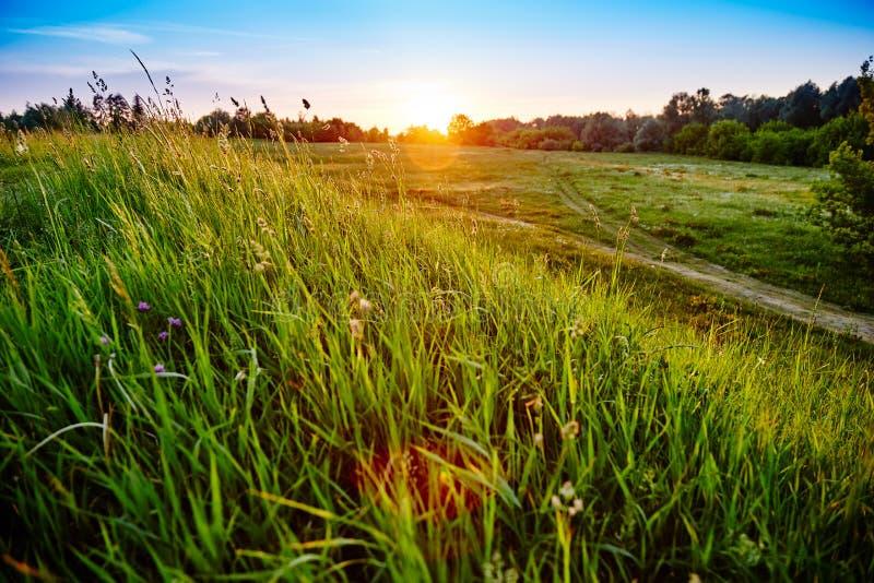 Herbe grande verte dans la perspective du coucher de soleil images libres de droits