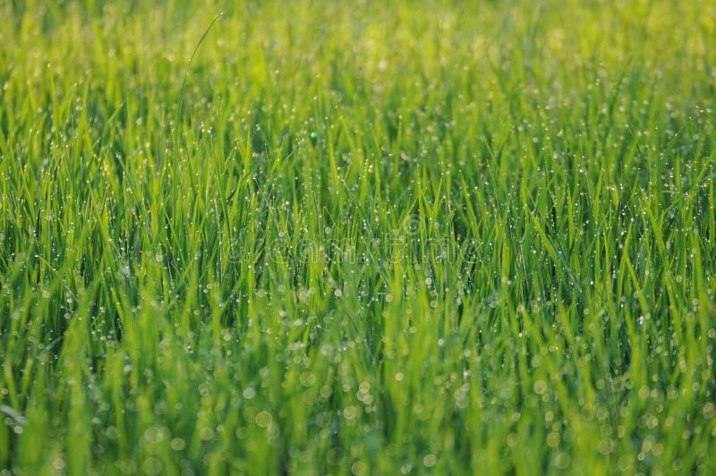 Download Herbe humide image stock. Image du nature, humide, herbe - 45363215