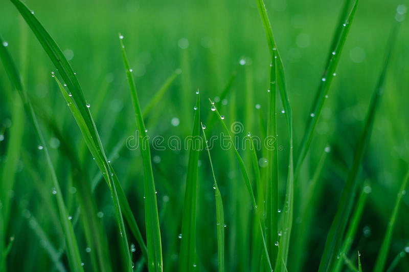 Download Herbe humide photo stock. Image du humide, vert, nature - 45363460