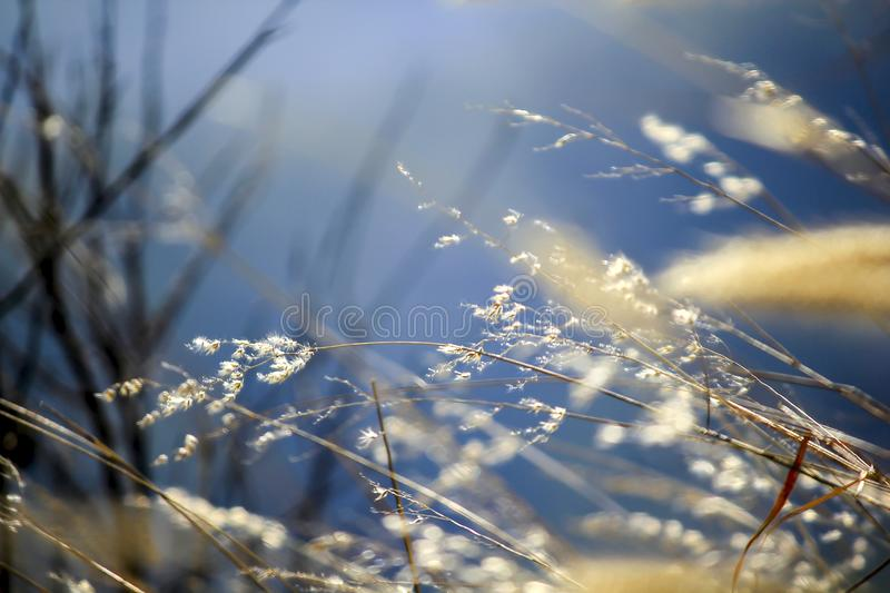 Herbe inclinant dans le vent images stock