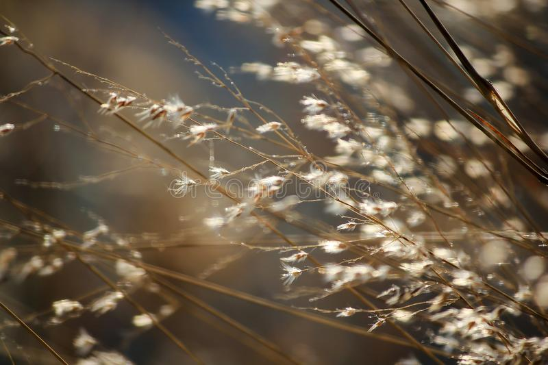 Herbe inclinant dans le vent photo stock