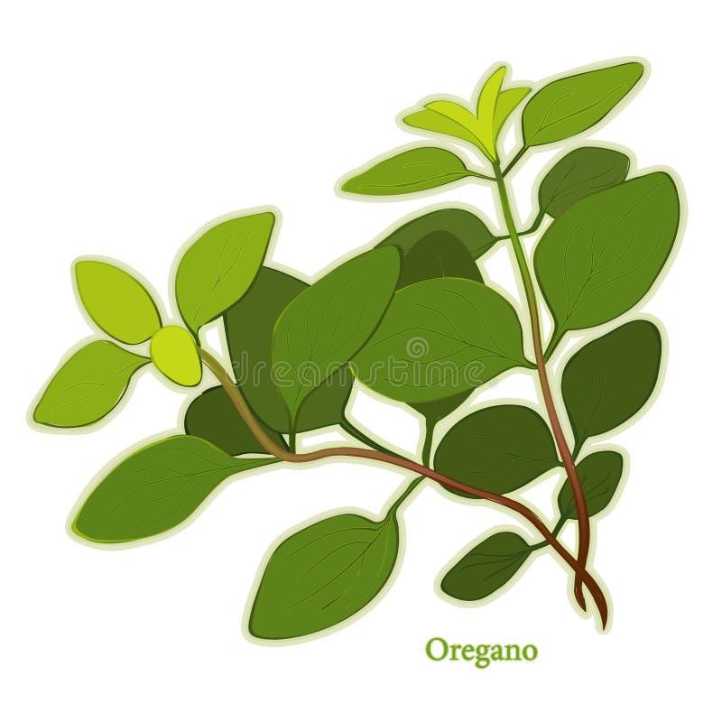 Herbe italienne fraîche d'origan illustration de vecteur