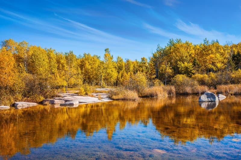 Herbe jaune d'automne photographie stock libre de droits