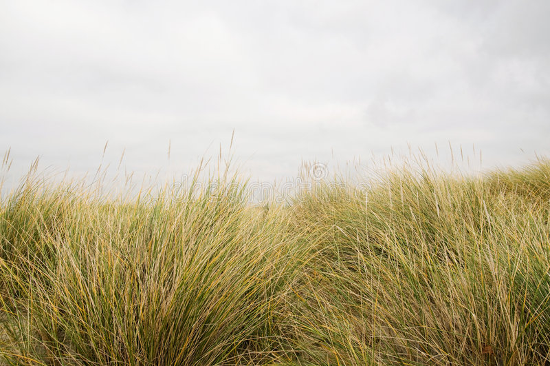 herbe longtemps photographie stock