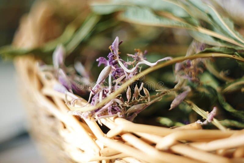 Herbe médicinale sèche dans un panier en osier photographie stock libre de droits