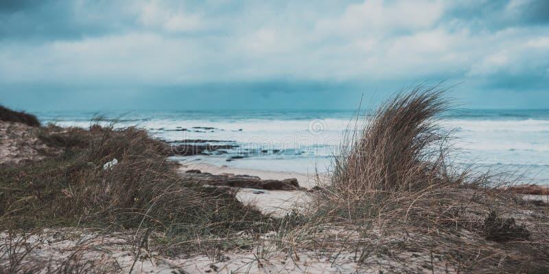Herbe marine dans un rivage de plage photos stock