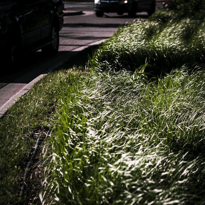Herbe mobile contre la rue passante image libre de droits