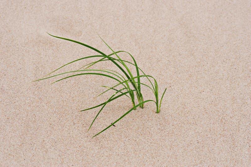 Herbe par le sable images stock
