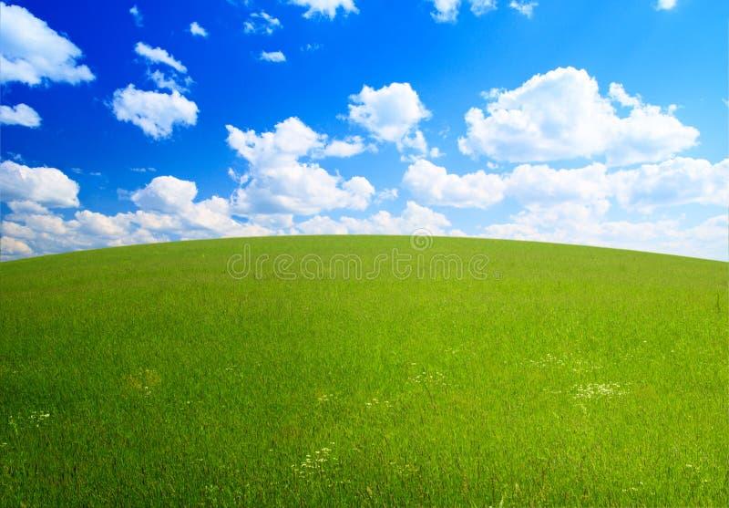 Download Herbe parfaite d'été image stock. Image du nuage, cloudscape - 8659653