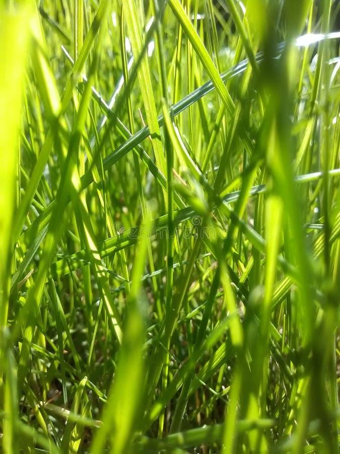 Herbe Pologne de ressort photo stock