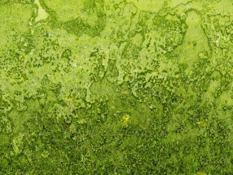 Herbe rugueuse de texture verte de fond image libre de droits