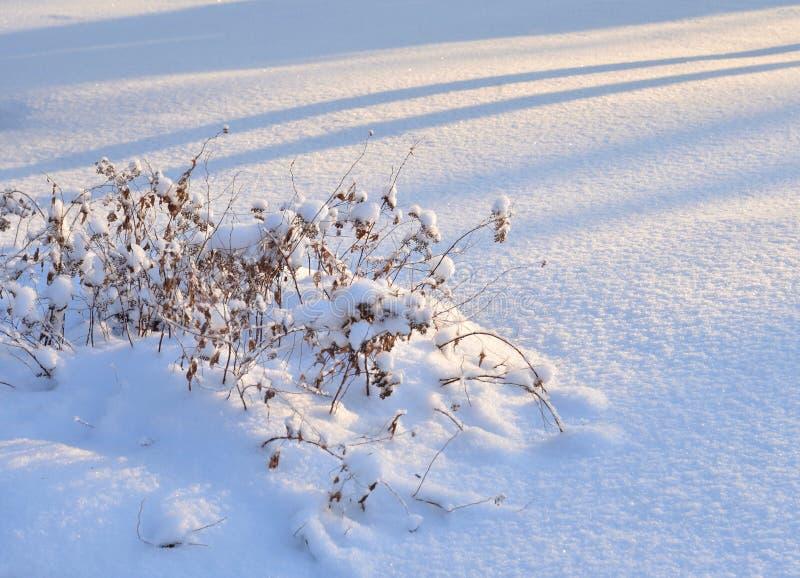 Herbe sèche à l'hiver photos libres de droits